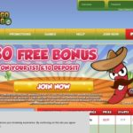 Bingogringo Betting Offers